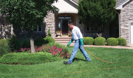 lawn care technician in weed free lawn